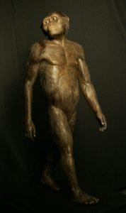 Australopitheciner