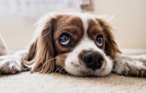 Forstår hunden hva du sier?