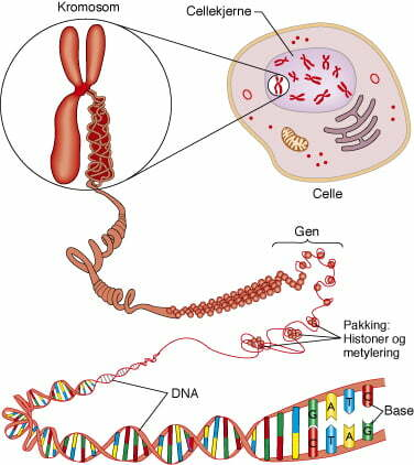 gen-kromosom-dna