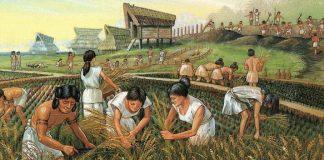 jordbrukssamfunn