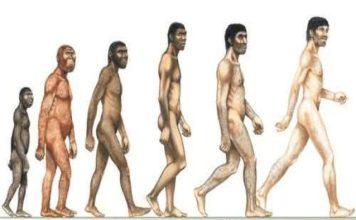 menneskets evolusjon
